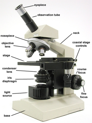 The photo above is a biological compound microscope. It is not a gemological microscope. It is for illustrative purpose only.